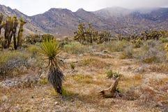 Desierto americano Fotos de archivo libres de regalías