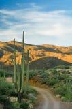 Desierto Backroad Imagenes de archivo