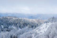 Desierto canadiense con el bosque mezclado - nevado imagen de archivo