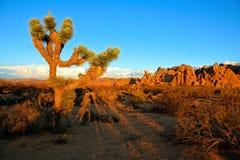 Desierto cerca de la puesta del sol, California de Joshua Tree Foto de archivo libre de regalías