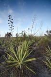 Desierto con agavos en Cabo de Gata Imagen de archivo libre de regalías