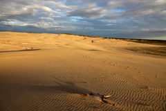 Desierto con las pistas en la arena Imagen de archivo libre de regalías