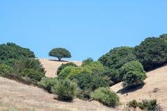 Desierto con los árboles Imagenes de archivo