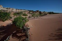 Desierto de Arizona Fotografía de archivo libre de regalías