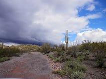Desierto de Arizona Foto de archivo