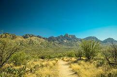 Desierto de Arizona Imagen de archivo