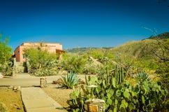 Desierto de Arizona Imagenes de archivo