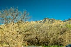 Desierto de Arizona Fotografía de archivo