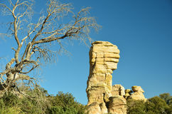 Desierto de Arizona Imagen de archivo libre de regalías