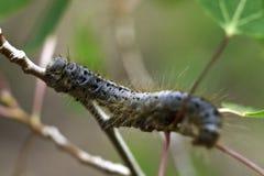 Desierto de Caterpillar Lost Creek Imágenes de archivo libres de regalías