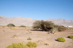 Desierto de Evrona Imagen de archivo