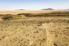 Desierto de Gobi fotografía de archivo libre de regalías
