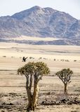 Desierto de Gobi fotos de archivo