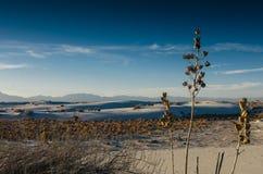 Desierto de Judean Fotos de archivo libres de regalías