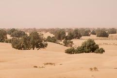 Desierto de la arena con los árboles verdes en Marruecos foto de archivo libre de regalías