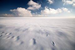 Desierto de la nieve Imagen de archivo