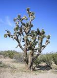 Desierto de Mojave imagen de archivo
