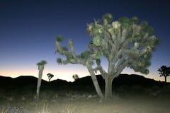 Desierto de Mojave de Joshua Tree Big Rocks Yucca Brevifolia de la subida de la roca Imagen de archivo libre de regalías