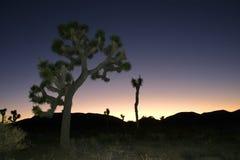 Desierto de Mojave de Joshua Tree Big Rocks Yucca Brevifolia de la subida de la roca Fotografía de archivo libre de regalías