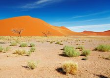 Desierto de Namib fotos de archivo libres de regalías