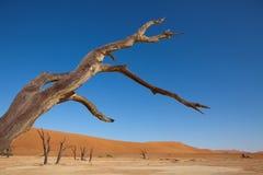 Desierto de Namib Fotografía de archivo