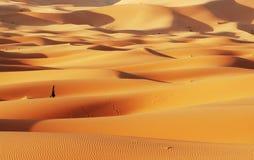 Desierto de Sáhara imagen de archivo