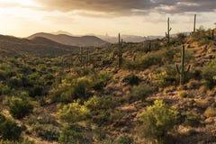 Desierto de Sonoran Foto de archivo