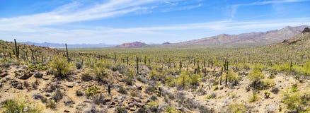 Desierto de Sonoran Imagen de archivo