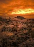 Desierto de Sonoran en el fuego foto de archivo