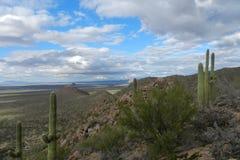 Desierto de Sonoran en el parque nacional de Saguaro Foto de archivo