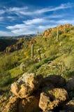 Desierto de Sonoran en la floración Fotos de archivo libres de regalías