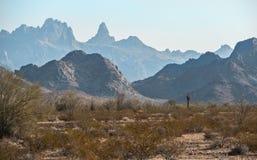 Desierto de Sonoran, reserva del nacional de Kofa imagen de archivo libre de regalías