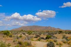 Desierto del árbol de Joshua Fotos de archivo