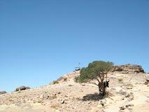 Desierto del Petra Fotos de archivo libres de regalías