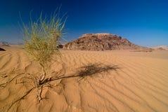 Desierto del ron de Vadi imágenes de archivo libres de regalías