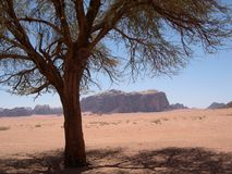 Desierto del ron del lecho de un río seco del desierto Fotos de archivo