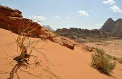 Desierto del ron del lecho de un río seco - Jordania Fotografía de archivo libre de regalías
