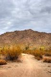 Desierto del Sonora Foto de archivo