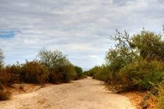Desierto del Sonora Fotos de archivo libres de regalías