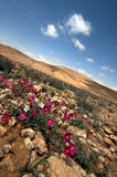 Desierto diagonal Fotos de archivo libres de regalías
