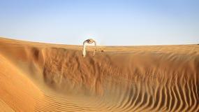 Desierto Eagle Owl Foto de archivo