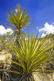 Desierto en al oeste de los E.E.U.U. Imagen de archivo