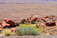 Desierto en Arizona Foto de archivo