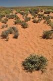 Desierto en Arizona Imagen de archivo libre de regalías