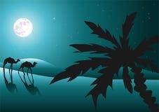 Desierto en la noche con los camellos Foto de archivo libre de regalías