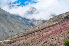 Desierto floreciente en el desierto de Atacama chileno Imagenes de archivo