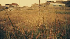 Desierto, hierbas salvajes metrajes