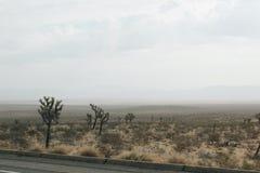 Desierto Joshua Tree fotos de archivo libres de regalías
