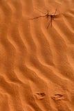 Desierto libio Fotos de archivo libres de regalías