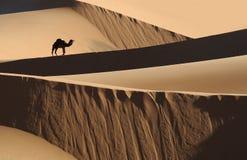 Desierto marroquí 1 Foto de archivo libre de regalías